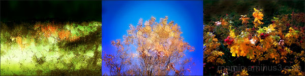 autumn fall-foliage roamin saturation triptych