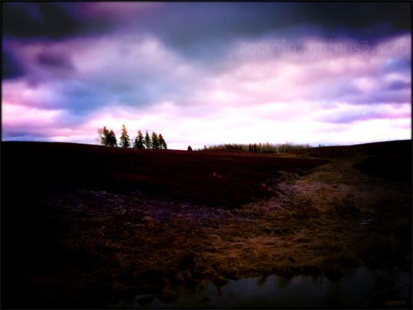 nightfall dusk sunset clouds blueberries barrens