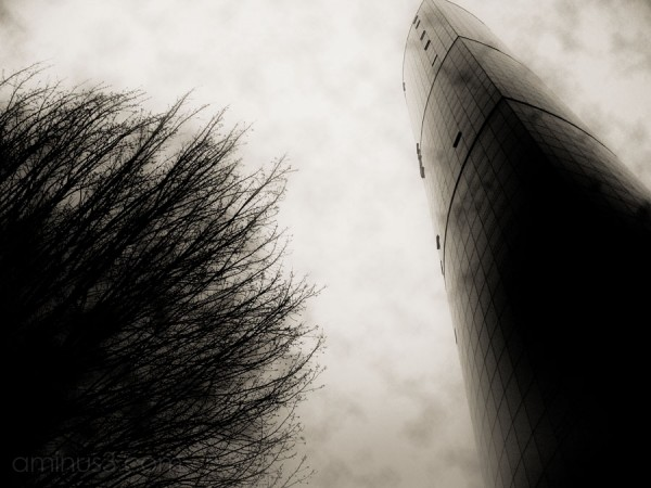 tree and skyscraper reach to each other