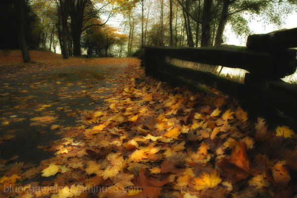 fallen autumn leaves along a pathway with fence