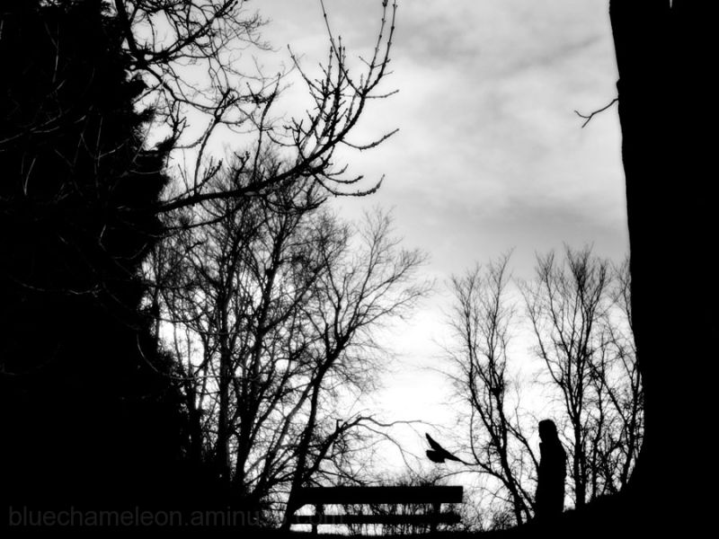 man above walking by park bench, bird above