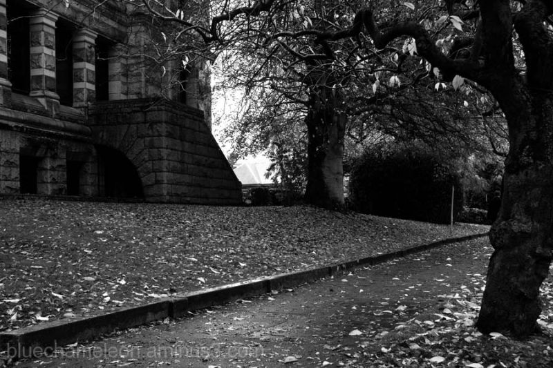 A stone building along a sidewalk covered in leave
