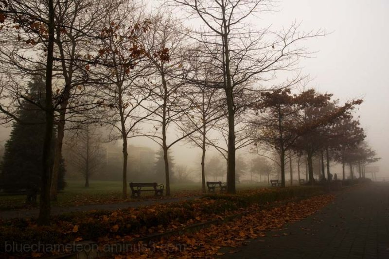 Trees and fallen leaves line a pathway in fog