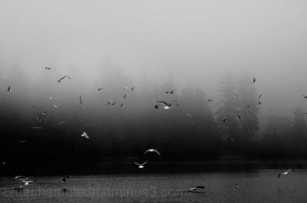 A flock of seagulls flying over a foggy lagoon