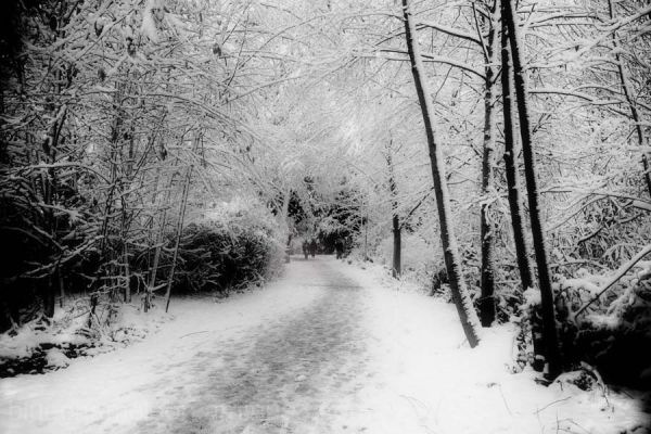 A snow covered path in a forest