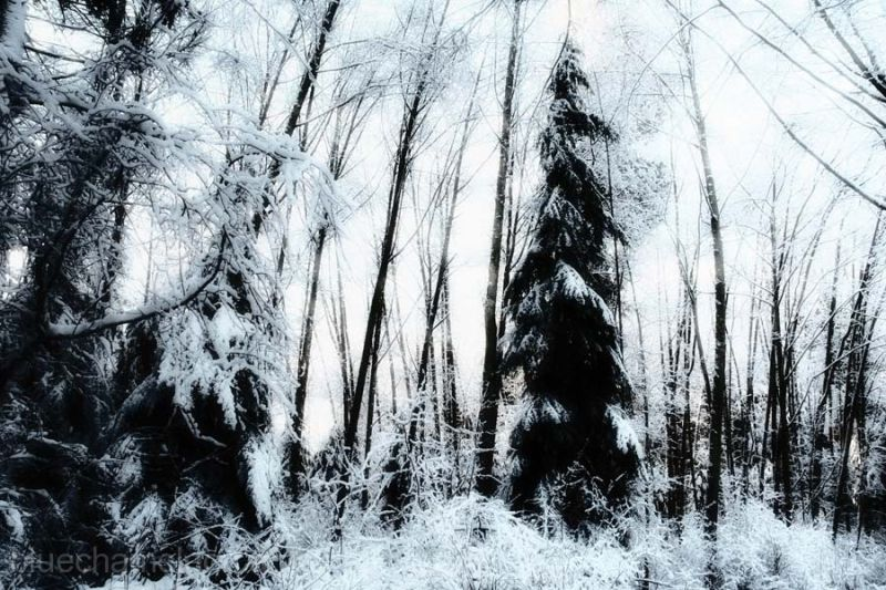 A enchanted forest covered in snow