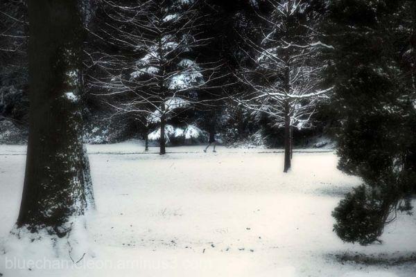 A man in shorts walking thru winter forest
