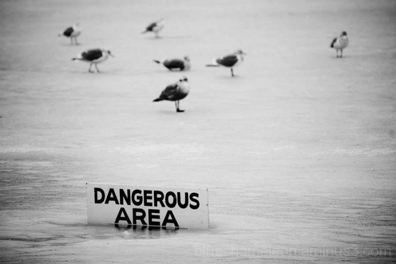 Birds on frozen lagoon with 'dangerous area' sign
