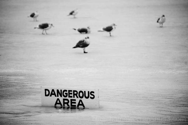 Birds on frozen lagoon with 'dangerous area' sign