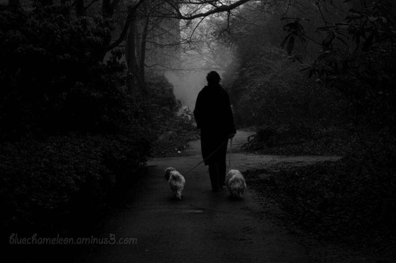 A woman walking 2 dogs toward fog