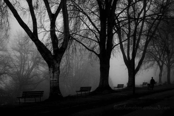 A man walks his dog in fog along 7 benches