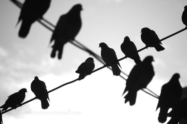 birds on two wires