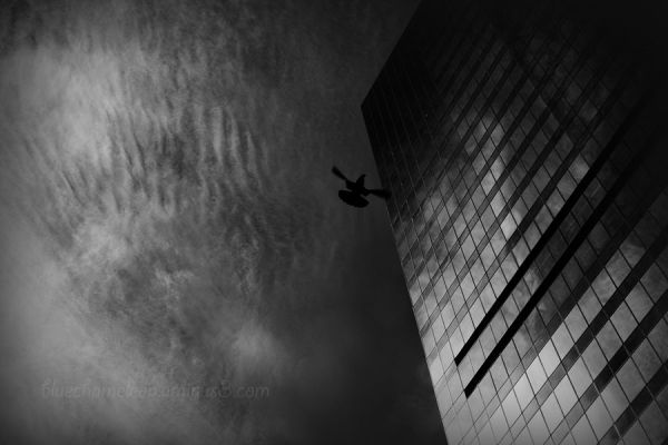 A bird flies high against clouds, reflecting tower