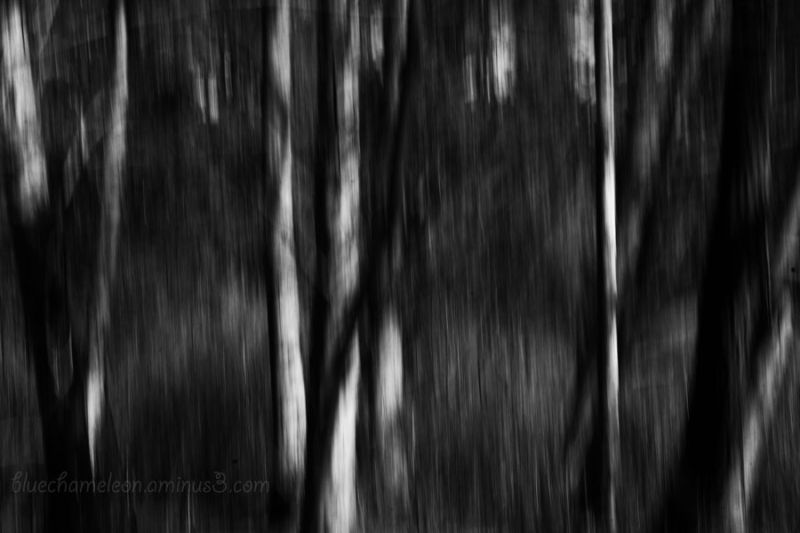 A blurred landscape in black and white.