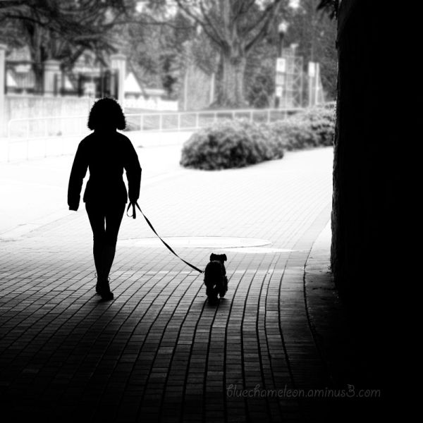 A silhouetted woman w ith fuzzy hat walking dog