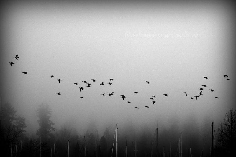 A gaggle of geese fly across a foggy sky