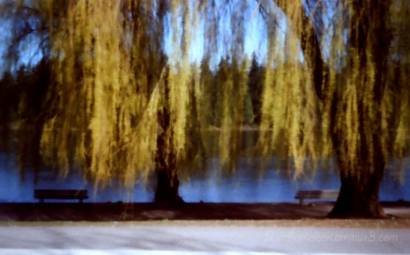 Two park benches and weeping willows at a lagoon