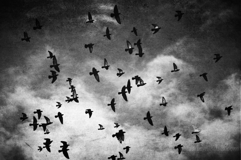 Many birds flying across the sky