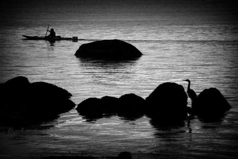 A man in a kayak in the ocean with heron watching