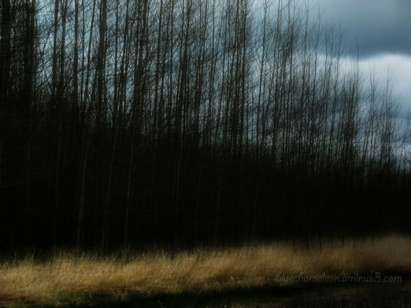 Blurred trees & landscape as seen from moving car