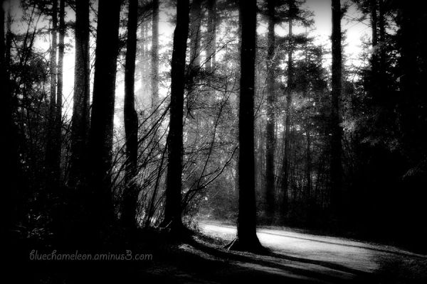 A light and mist on a pathway in the forest