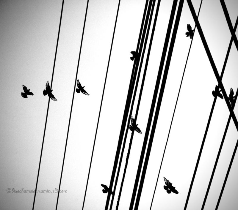 Birds flying and landing on electrical wires