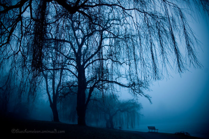 Park benches &amp; willow trees in the mist