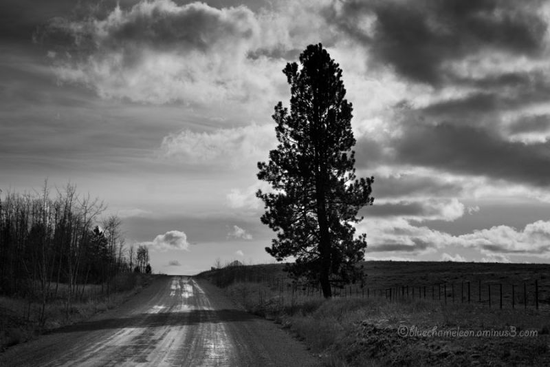 A lone tree against stormy sky on dirt road