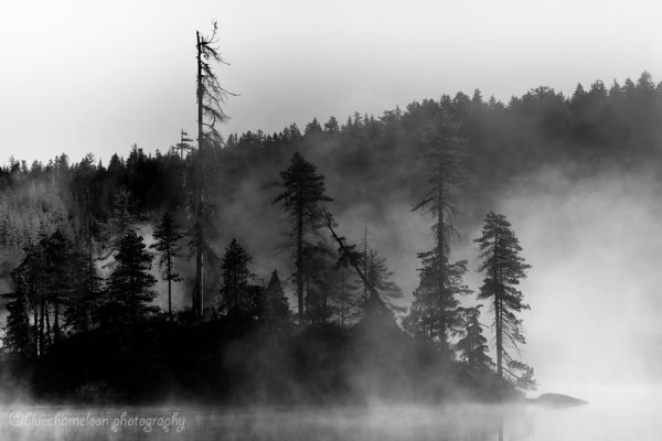 Small island of trees in the mist