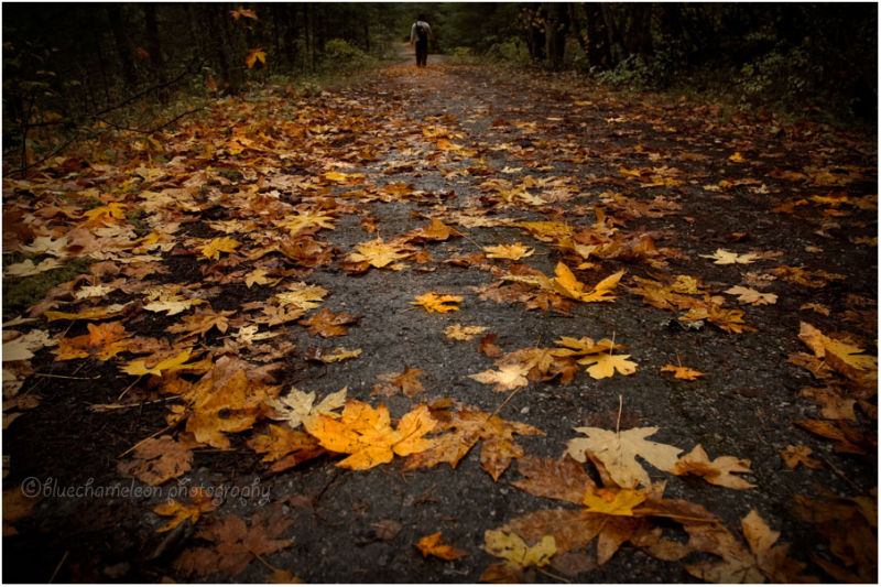 Fallen leaves on forest path