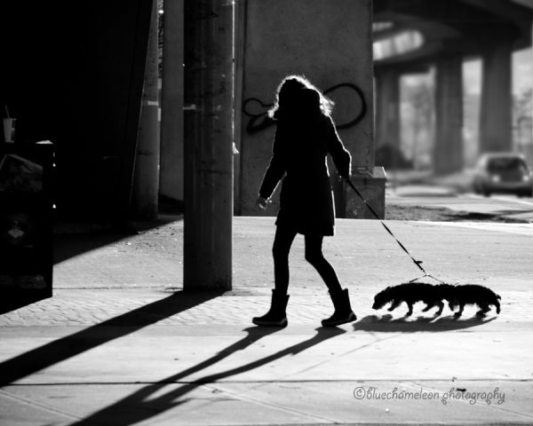 A silhouetted woman walking 2 dogs
