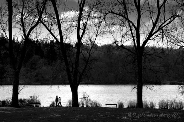 A couple walking past lake with 3 trees