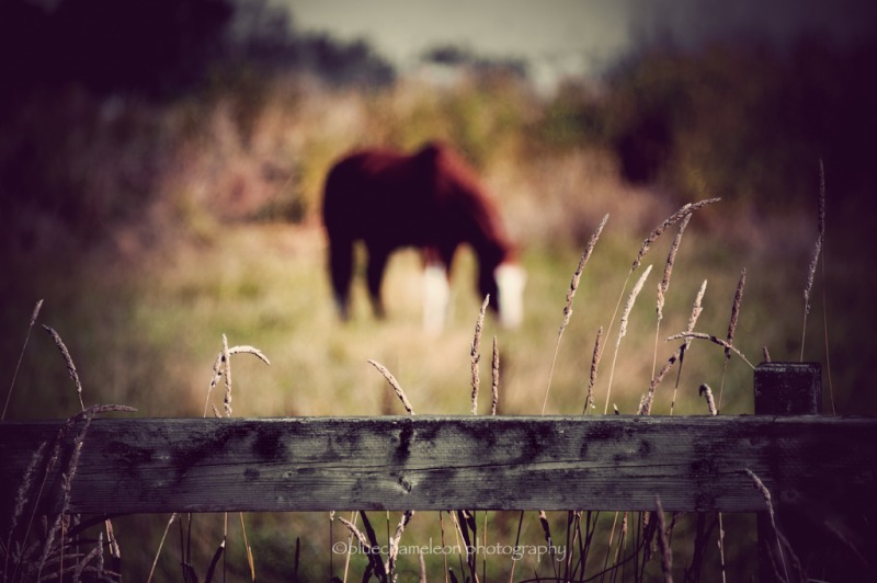 Out of focus horse grazing beyond wooden fence