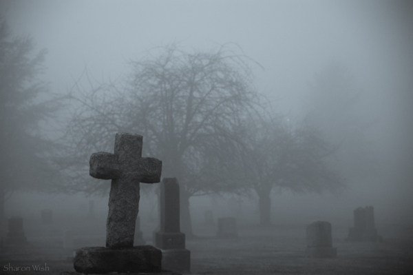 A foggy cemetery with trees and headstones.