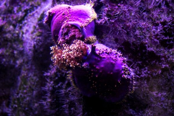 La Rochelle - aquarium