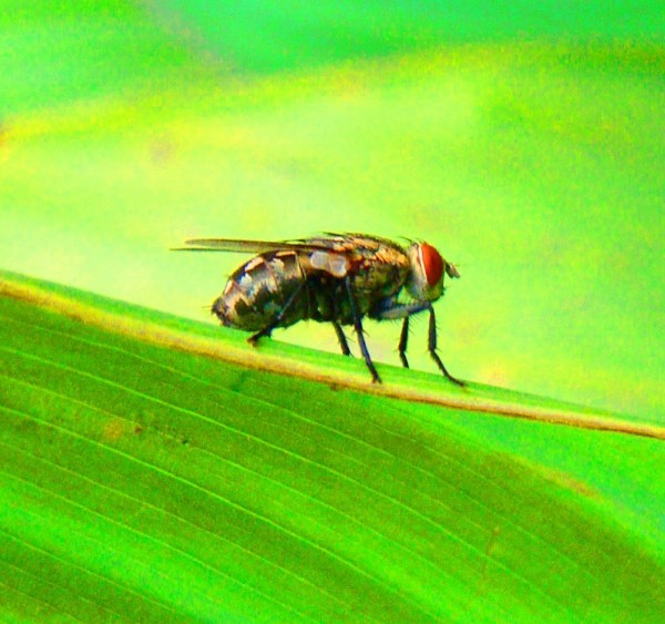 fly on a leaf drone eyes
