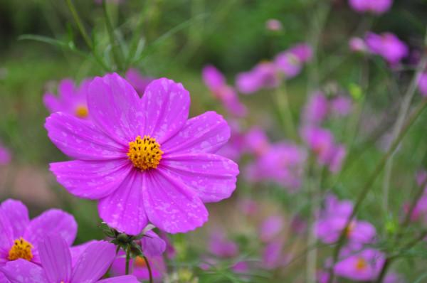 Flowers @ Rock Garden Darjeling