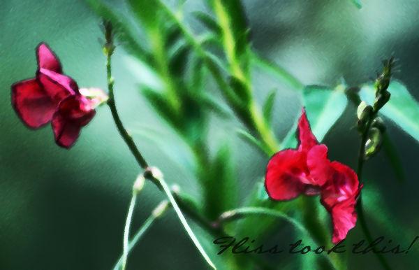 Florida Wildflower