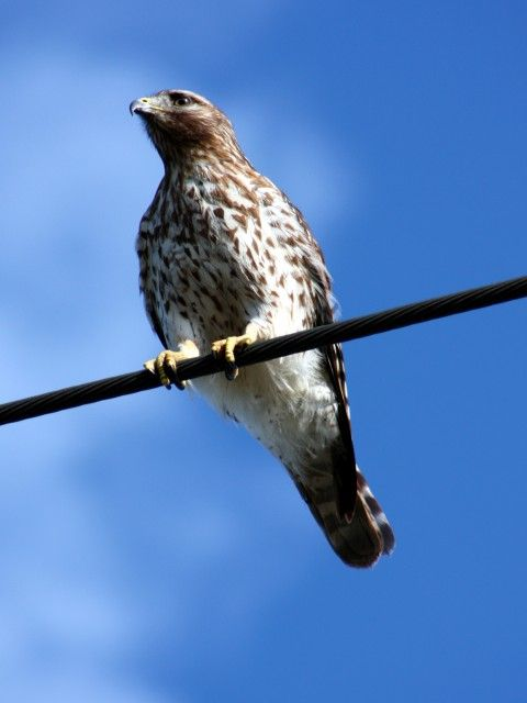 Sitting on a Wire