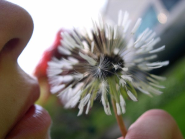 Wishing on a wishing flower~!
