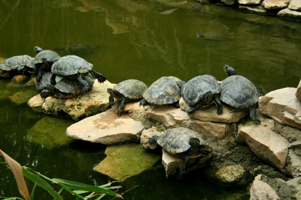 sleeping turtles