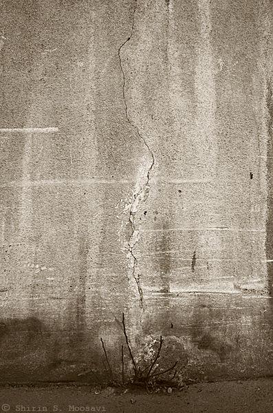 nature, struggle, crack, asphalt, shirin moosavi