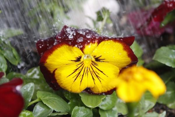 Rain Equals Life