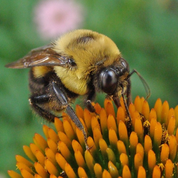 Getting pollen
