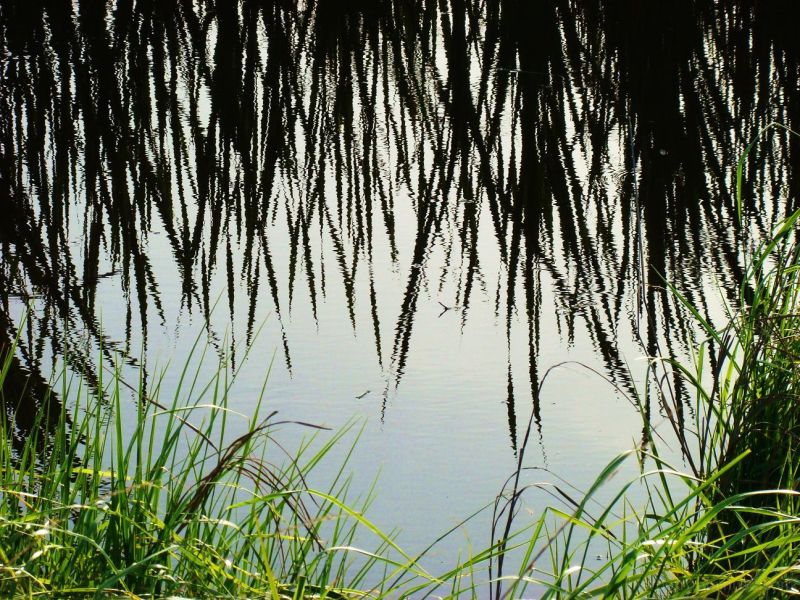 Grass reflections