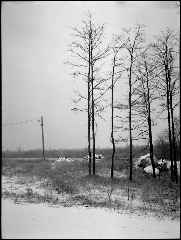 trees in snow - b&w photo - missouri
