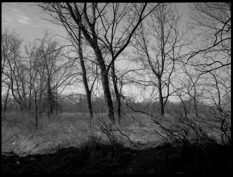 field and trees, mosby missouri, photograph