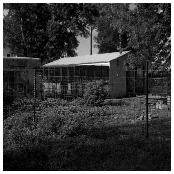 fence for chickens - highland, ks - photograph