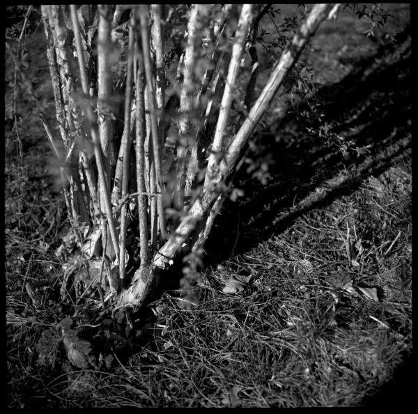 thorn bush - grant edwards photography