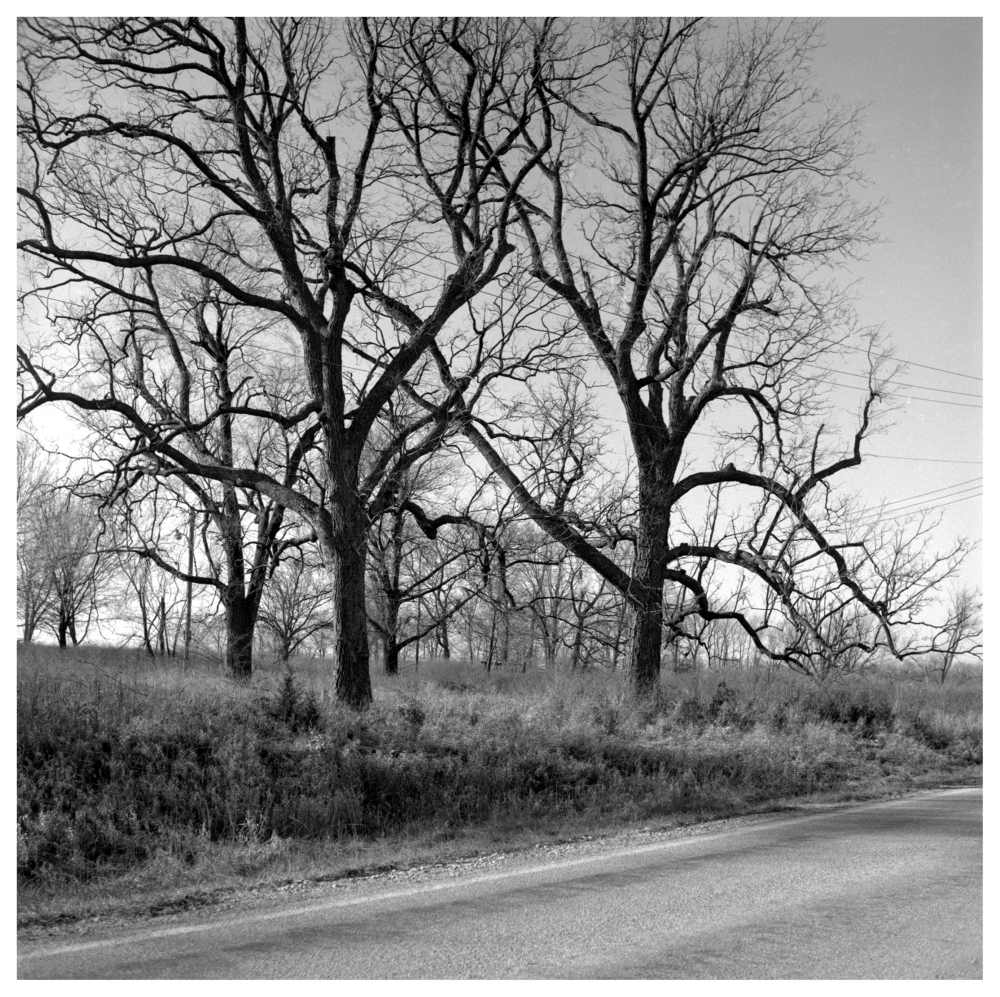 winter trees - grant edwards photography